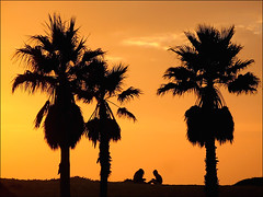 Overpowered by Nature (PatriciaPix) Tags: ocean california friends sunset orange sun tree beach silhouette set catchycolors bay palm mandalay oxnard catchycolorsorange yourphototips epiceditsselection