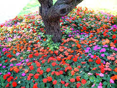 Secret Fairy Garden!