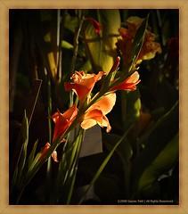 (Gaurav_Patil) Tags: morning flowers columbus urban india flower colors leaves canon photography 50mm leaf dof searchthebest bokeh f18 pune 30d canon30d goldstaraward vosplusbellesphotos urbancolumbus