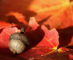 Autumns light (lynne_b) Tags: autumn light color fall nature leaves illinois shadows seasons bokeh acorn archives featuredinthedailyherald