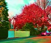Flaming Red (*Somerset.*) Tags: blue autumn red sky house tree fall leaves sunshine foliage greenery colourful views25 25viewclub views2550 top20red top30red