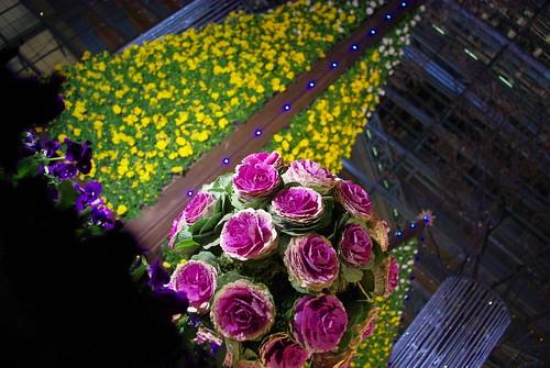 Flower Fantasia 2008-10