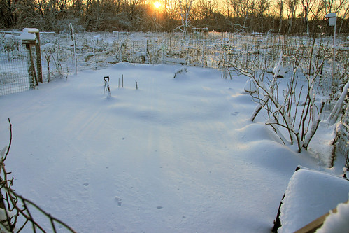 my community garden plot in the snow