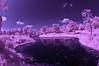 Pond View in Purple in Japanese Park (aeschylus18917) Tags: japan tokyo showakinenpark tachikawa japanesegarden sceneryinfrared nikon d70 danielruyle aeschylus18917 danruyle druyle 赤外線 ir infrared landscape pond bridge purple scenery surreal 立川 昭和記念公園 nikond70 sky tree ダニエルルール 丹尼爾 ダニエル ルール infra red park 公園 garden 庭 grass trees 105mmf28gfisheye nikkor105mmf28gfisheye 日本 105mm pxi pxt