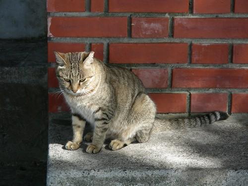 淡水碼頭 - 小貓咪