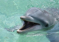 Smiling Dolphin (Candidly Captured Photography) Tags: fish cute water feeding dolphin australia tricks dolphins queensland seaworld bottlenosedolphins