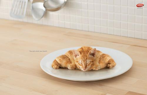 Lifebuoy - Kitten