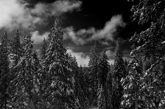B+W Heavy Red Filter Shaver Lake Winter (After Dark Photo) Tags: winter blackandwhite bw snow storm clouds polarizer pinetrees sierranevadas winterstorm redfilter