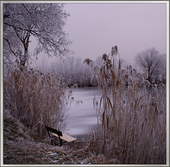 Winter in Hungary (citrit1) Tags: life nature searchthebest 2008 soe awesomeshot abigfave anawesomeshot diamondclassphotographer flickrdiamond citrit heartawards theunforgettablepictures platinumheartaward beterthangood sonya200 artofimages