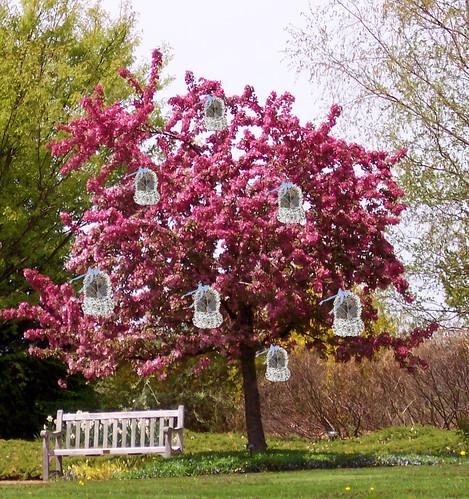 spring-blossoms-2