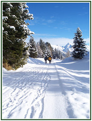 Winter Wonderland (crafteelady) Tags: blue trees winter white snow ski walking austria tirol track skiing bluesky trail fir wonderland tyrol picnik mayrhofen penken fotocompetition fotocompetitionbronze fotocompetitionsilver