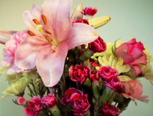 Flowers pinhole 30Jan09