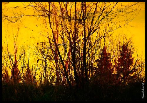 Ma rivière... jaune...!!!