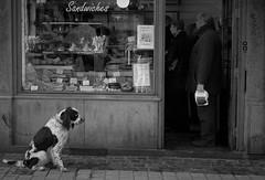 la queue, comme tout le monde ! (dominique godard) Tags: bw dog waiting lige uneviedechien petiteshistoiressansparoles lameilleurecharcuteriedelige