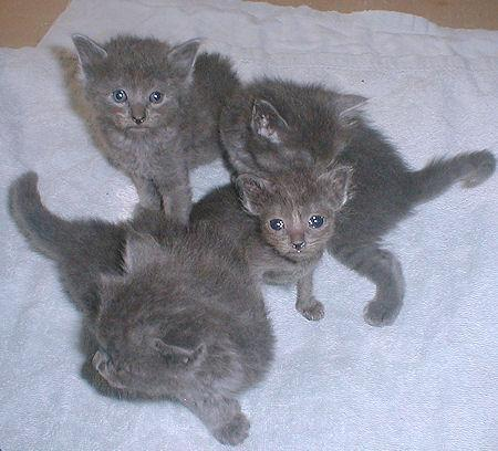 We have kittens 3252938125_c5ef380048_o