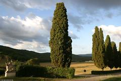 IT07 1371 Borgo La Bagnaia (Templar1307 | Galerie des Bois) Tags: morning travel trees summer italy sunrise europe italia eu tuscany cypress 2007 tuscano bagnaia  borgolabagnaia