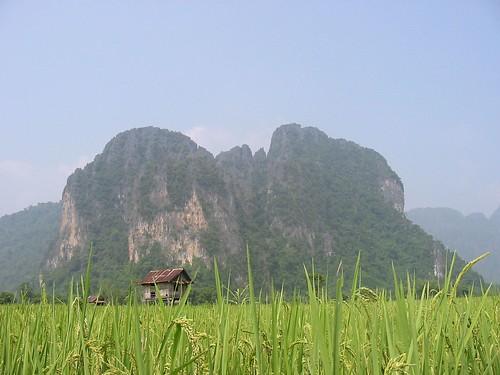 Schitterend wandelen in de rijstvelden