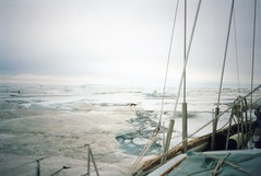 940809 Icebound (rona.h) Tags: arctic arcticfox cloudnine ronah bowman57
