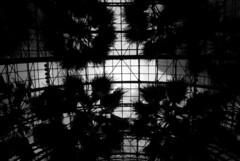 World Financial Centre Atrium 1 (jamesinnottingham) Tags: world new york trees white black manhattan centre dslr atrium financial plam d3000
