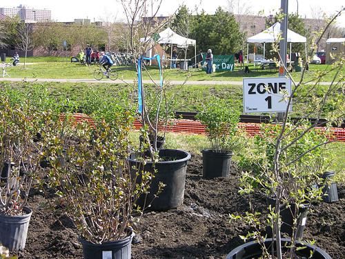 2011 Arbor Day Greenway zone 1