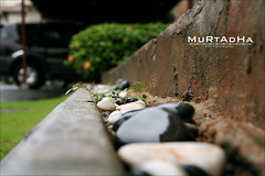 .. ! (|| MURTADHA ||) Tags: green love rock alone romance where when   {        mobde3 m0bde3    murtadha