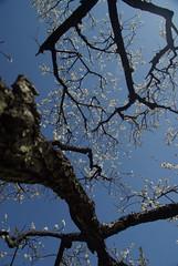 可憐な花と力強い枝ぶり / Strength