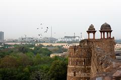 Delhi_Safari-76