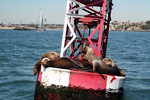Sea Lions vs. Pirates