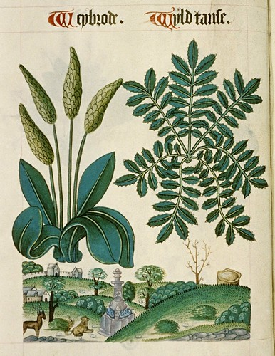 MS. Ashmole 1504