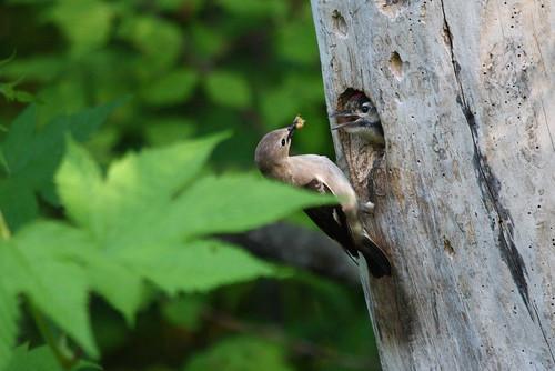 Bird fostering