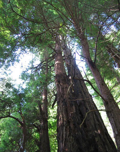 June 17 - Muir Woods - 5