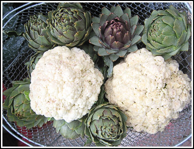 ArtichokesandCauliflowers copy