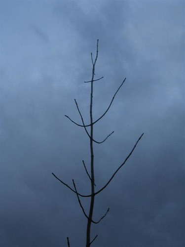 Sparse branch against grey sky