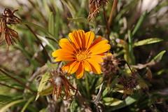 dsc_1832.jpg (Chris Sykes) Tags: spain floraandfauna export