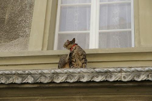 發現午後懶懶的小貓