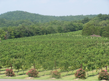 Chaumette Vineyards, Ste. Genevieve, MO
