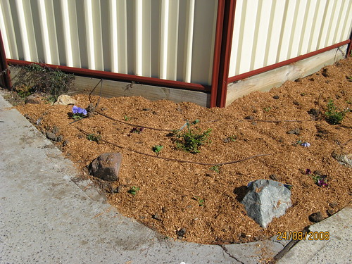 Katie's plant