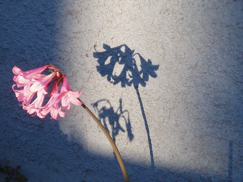 Flower Shadow