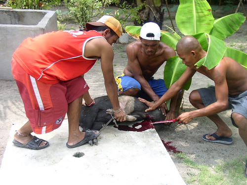 Siargao Island, Surigao del Norte lechon roasting preparation pig traditional rural scene  Buhay Pinoy Philippines Filipino Pilipino  people pictures photos life Philippinen
