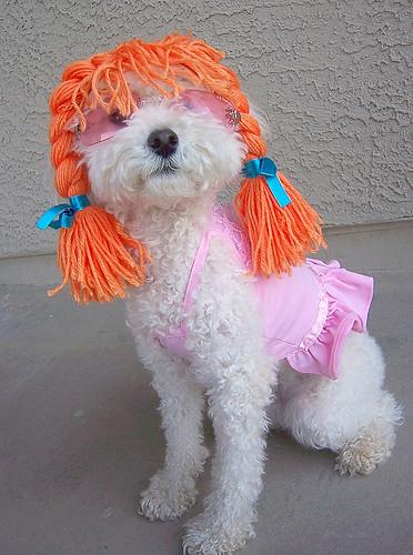 Cães (Funny Dogs) 2830240523_f380513dd6