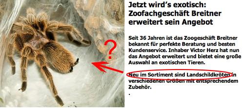 Landschildkröte Zoo Breitner