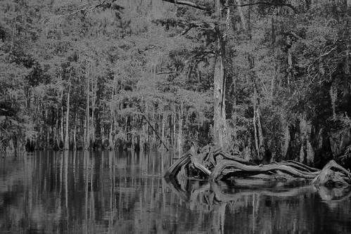 fisheating creek september 21 192