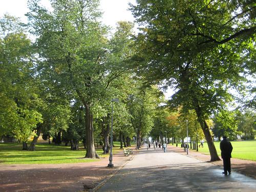 60 puuta kaadetaan Kaivopuistossa by Anna Amnell