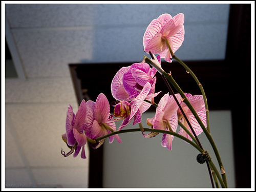 Orchid in the Library
