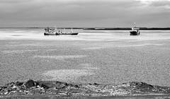 Sld (eyben) Tags: fishing herring stykkishlmur eyben breiafjrur sld sldveiar eythorbenediktsson eyrbenediktsson