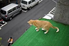 Long way down / lol , don't jump ! (summerrunner) Tags: people cat 35mm nikon taipei qq nikkor soe 生活 blueribbonwinner d80 mywinners platinumphoto theunforgettablepictures