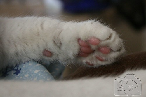 2/365 - Colors paw