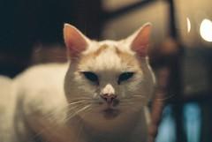 geoffrey (Harry_Brooks) Tags: cat geoffrey prakticatl1000 kodakcolorplus200