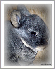 Baby rabbit. (Stanegg) Tags: morning light portrait pet baby pets brown white cute rabbit bunny nature animal photoshop grey jump pretty newborn carrot planet catch fujifilm carrots rabbits mascotas