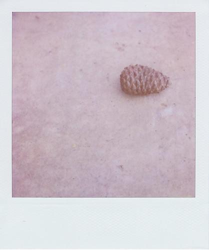 lone pinecone
